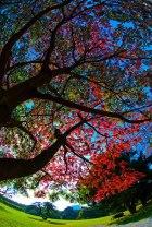 alberi_settembre
